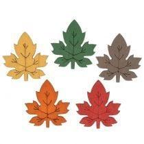 Feuillage, feuilles et champignons