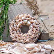 Couronne décorative escargots Couronne de porte décorative maritime escargots de mer Ø25cm
