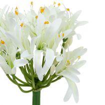Agapanthe blanche 78 cm 1 p.