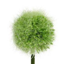 Allium vert L. 37,5 cm 4 p.