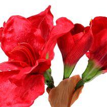 Amaryllis Rouge Foncé 72.5cm