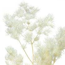 Asperges sèches décoration herbe ornementale séchée blanche 100g
