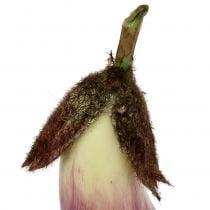 Aubergine 18,5cm violet