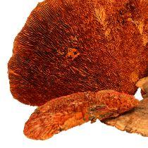 Arbre éponge orange 1kg