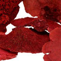 Champignon polypore rouge 1 kg