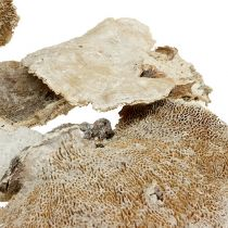 Champignon polypore nettoyé 1 kg