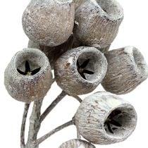 Bellgum twig 5-7 blanchi à la chaux 20pcs