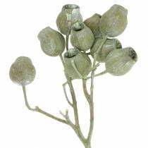 Branche de bellgum 5cm - 7cm vert dépoli 20pcs