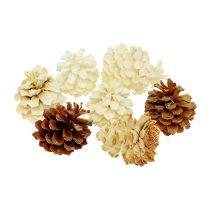 Pommes de pin de montagne, petites, blanchies 3,5-5cm 1kg