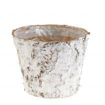 Pot avec bouleau blanc Ø15cm H12.5cm