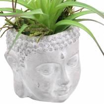 Tête de Bouddha à planter en béton gris, blanchi à la chaux Ø8 H8cm