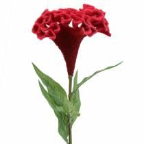 Celosia cristata Hahnenkamm Rouge 72cm