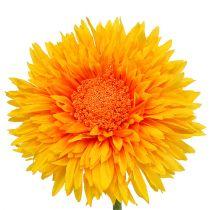 Chrysanthème Teddy 63 cm jaune doré