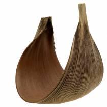 Feuille de cocotier Galera pliée