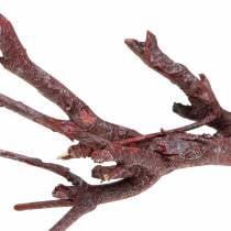 Branche d'immortelle ou plante curry, rouge 500 g