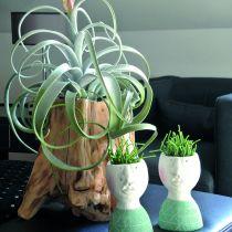 Pot racine décoratif gris 33cm x 29cm H30cm