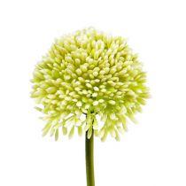 Crème d'Allium Décorative Ø6,5cm L39cm