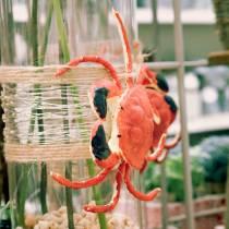 cancer décoratif rouge 15cm