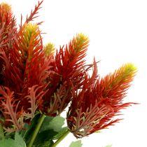 Chardon 20 cm rouge-vert 12 p.