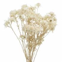 Brindille de chardon de fleur séchée blanchie 80g