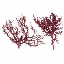 Dekoast branche de corail rouge blanchi 500g
