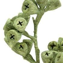 Branches de salignum avec c nes bordeaux 25 p boutique - Branche d eucalyptus ...