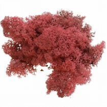 Deko-Mos Rot mousse de renne de Bordeaux pour la décoration et l'artisanat 400g