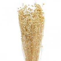 Herbe sèche Flax Bleached Dry Flax 100g