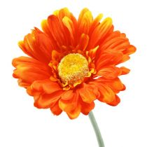 Gerbera Orange Ø10cm L55cm 6pcs