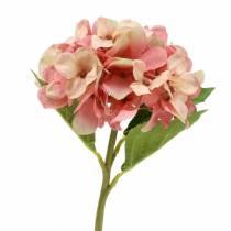 Hortensia beige / rose 35cm