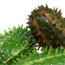 Figue de Barbarie 5cm brun vert 6pcs