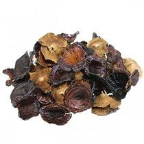 Champignon Kalix naturel laqué champignons secs décoration grand 50pcs
