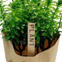 Herbes aromatiques en pot 16 cm vert