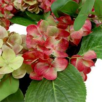 Chapelet d'hortensias Ø60cm Vert, rose vif 1P