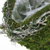 Boule de décoration de tombe vignes vert mousse, blanchi à la chaux Ø20cm