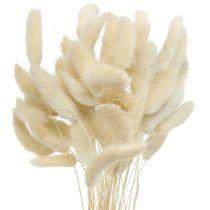 Lagurus herbe de queue de lapin séchée blanchie 40-50cm 50pcs