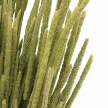 Timothy grass naturel 50-60cm 100g
