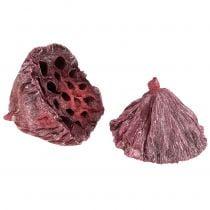 Mélange de fruits de lotus rouges blanchis 50 p.