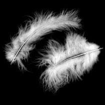 Plumes décoratives, plumes de marabout, décorations de Pâques, plumes pour artisanat Blanc 45g