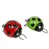 Coccinelles avec clip 4,5 cm rouge, vert 6 p.