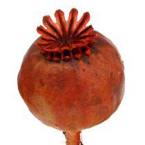 Têtes de pavot teintes orange 100p