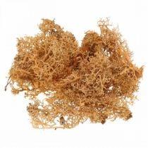 Mousse décorative pour l'artisanat Mousse naturelle de couleur orange conservée 40g