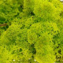 Mousse décorative en mousse de renne vert clair, matériau artisanal préservé 400g