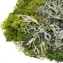 Mousse décorative pour l'artisanat Mélange de mousse et de lichen vert, gris 100g