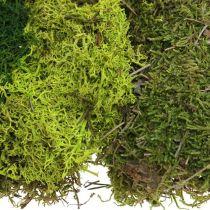 Mousse décorative pour l'artisanat mélange vert, mousse naturelle vert clair 100g