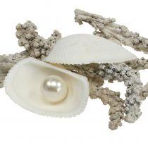 Mélange de coquillages avec perle et bois blanc 200g