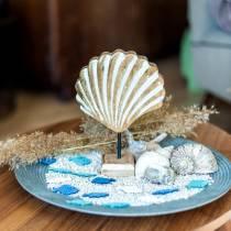 Coque avec base en bois blanc, naturel 20 × 14cm Décoration maritime pour le salon