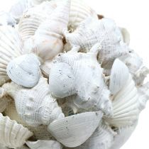 Coquille boule blanche Ø10cm