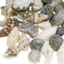 Déco coquille d'escargot mini nature mix décoration maritime 1kg