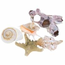Shell mix naturel assorti 5pcs